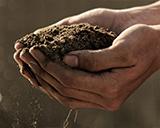 hands cupping dirt