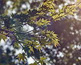 tree branch and leaves
