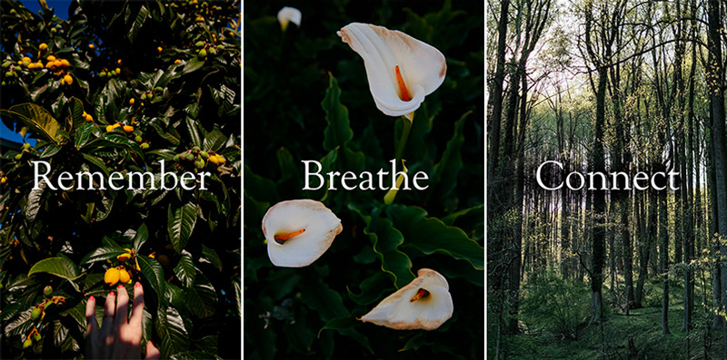 Remember, breathe, connect