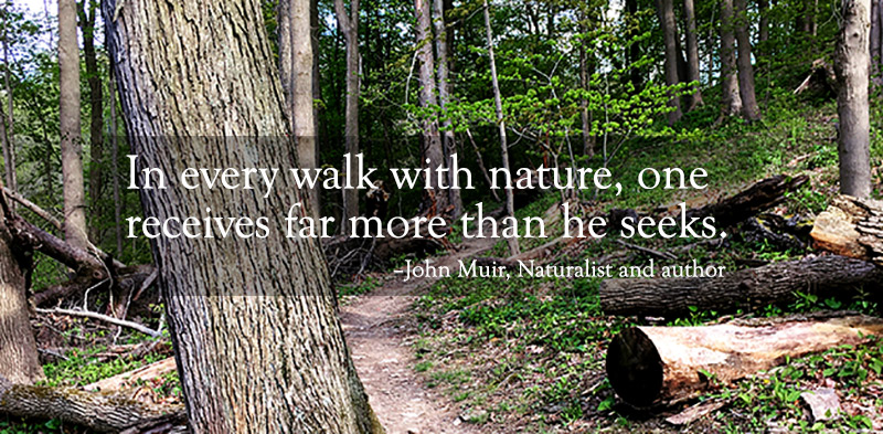 quote over image of woods trail